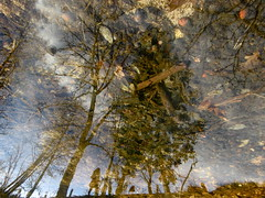 Walking the Woods (andressolo) Tags: reflection reflections reflejos reflect reflejo reflected water agua trees tree forest clouds nature nubes leaves distortion distortions distorted