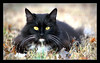 Sunday Mild (J Michael Hamon) Tags: cat gato chat katze gatto pussy animal outdoor nature portrait pet photoborder february hamon nikon d3200 nikkor 55300mm