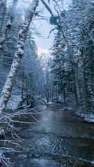 retouche-1000730 (Jeffray12) Tags: cascadesduherisson foret forêt bois neige riviere herisson