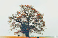 IMG_2938-01 (PhantOm_96) Tags: quê nhà cây gạo nước sông núi canon 5d 50mmstm 50mm f18 phong cảnh