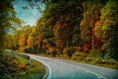 Autumn in Scotland .. (Julie Greg) Tags: autumn nature trees scotland colours texture road