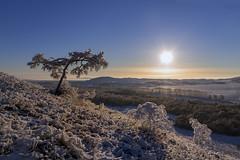 IMG_0270 (ЛеонидМаксименко) Tags: рассвет туман горы зима дерево иней