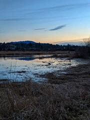 Aflight. (thnewblack) Tags: google pixel2xl android smartphone outdoors britishcolumbia heron 122mp f18 bird reflection