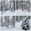 Beaucoup ... (sosivov) Tags: montage forest trees sweden snow squareformat winter white
