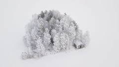 Surrounded by snow desert (Jyrki Liikanen) Tags: snow snowylandscape snowytrees frosty frost frostytrees barn snowyscenery snowyfields frozen windchill january winter wintrylandscape wintry arcticweather arctic countryside finland drone droning air airphotography nature naturephotography naturephoto