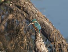 keoldeo-bharatpur-bird-sanctuary-1-3 (94) (jjamwal) Tags: birds birdwatching travel tamron nikon wildlife nature animals india
