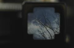 January sky...4/52 (jess feldon photography) Tags: lookslikefilm kodak jessfeldon viewfinder view sky branches vintagecamera framed macro dof depth throughtheviewfinder 52weeks challenge