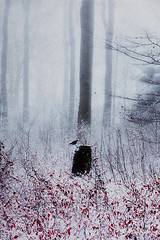 snow and mist (Dyrk.Wyst) Tags: deutschland germany landschaft natur nebel schnee winter wuppertal atmosphere blue calm cold dreamy fog forest landscape misty mood morning mystical nature outdoors snow trees twilight wilderness woodland trevillion trevillionvorschlag rejecteed