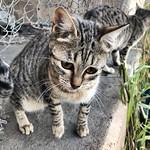 Ojitos O#gatos #gatoscallejeros #cats #photocats #instacats #neko #meow #gatze #gatto #koshka #catsofworld #catsofinstagram #streetcats #chat #eyelicious thumbnail