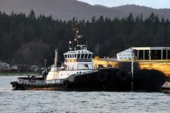 2018-02-17 Tractor Tug Millennium Dawn (2048x1360) (-jon) Tags: anacortes fidalgoisland sanjuanislands skagitcounty skagit washingtonstate washington salishsea pnw pacificnorthwest pacifcocean pacifc ocean curtiswharf guemeschannel towboat tug tugboat ship boat vessel tractortug millenniumdawn starlightpnw harleymarineservices a266122photographyproduction