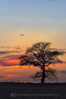 IT'S THAT TREE AGAIN......