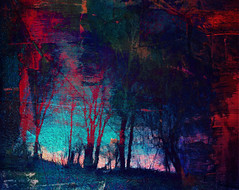 Blue red woods (Steven & Joey Thompson) Tags: blue red woods reflection
