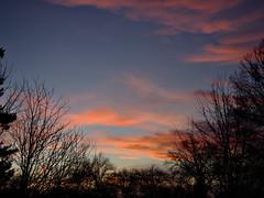 P2201103 (Paul Henegan) Tags: bluehour clouds crepuscule dusk silhouettes sky trees