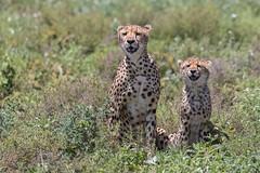 Smile! It's the weekend! (Hector16) Tags: ndutu tanzania serengeti nature arusharegion tz eastafrica wildlife ngc npc wildebeestmigration migration