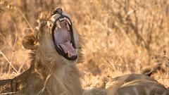 Nairobi-Nationalpark-1827 (ovg2012) Tags: kenia kenya nairobi nairobinationalpark