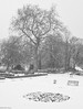 Snow Tree (peterphotographic) Tags: p2280175sefexedwm olympus tg5 tough ©peterhall walthamstow lloydpark e17 eastlondon london england uk britain tree snow park winter cold freeze weather graphic garden nik silverefexpro2 blackandwhite monochrome