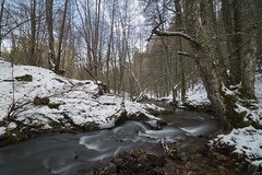 Parco nazionale della Sila, ruscello tra gli alberi (an.thoniee) Tags: alberi bosco cold foglie forest foresta freddo inverno landscape leaves montagna mountain natura nature neve paesaggio snow trees tronchi winter wood ruscello acqua creek water flow woodscape trunks naturescape