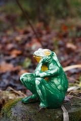 7/365 pensive frog