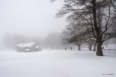 Nieve, frío y niebla (Jabi Artaraz) Tags: egiriñao gorbea nieve winter hayedo refugio casa montaña montañeros nature frío niebla jabiartaraz jartaraz zb euskoflickr