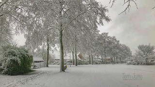 Winter in Odijk, Netherlands - 0405