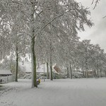Winter in Odijk, Netherlands - 0405 thumbnail