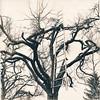 Jakobsleiter (bachirdebs) Tags: hasselblad trix rodinal ilford art 300 mt7 mt3 moersch tree iron se6 blue catechol selenium split toning