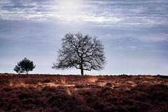 Freedom (katjacarmel) Tags: posbank light landschap natur outdoor serene clouds natuur peaceful calm freedom sky colors tree landscape outside nature