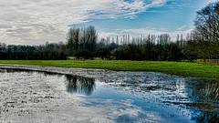 Slightly damp (nige.cox61) Tags: miltonkeynes waltonpark ou