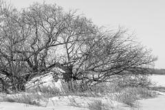 Manitoba Prairies in Winter (Keith Levit) Tags: interlake manitoba hwy7 prairies