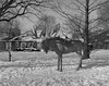 The Hunted (.:Axle:.) Tags: oakville ontario canada downtown oldtown historicdowntown erchless erchlessestate williamchisholm home manor estate history museum livinghistory chisholm winter snow park outdoor greenspace urban town lakeontario graflex pacemakercrowngraphic crowngraphic schneiderkreuznachxenar147135 ilford ilfordfp4 fp4 asa64 pyrocathd photographersformulary 11100 bw blackwhite pentaxspotmeterv epsonv700 adobephotoshopcc film filmphotography believeinfilm filmisalive filmisnotdead fp4party