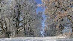 rafz_45_03012017_09'46 (eduard43) Tags: rafz 2017 januar schnee gnal rafzerfeld zürcherunterland