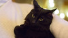 20171223-_OSY8210 (VilleHoo) Tags: tallinn muuricahe muurivahe sauna koti hima home muutto vat cat kissa kissat