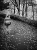 discovering Central Park (Web-Betty) Tags: nyc ny newyork newyorkcity centralpark city park urban bnw blackandwhite thebear