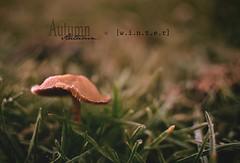 automne ou hiver (Chocolatine photos) Tags: givre hiver automne champignon bokeh nature nikon flickr makemesmile lumière