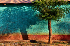 Pastel wall (Neal J.Wilson) Tags: ethiopia african africa tree wall building colors colour blue shadows streetscenes graphic nikon travel urban