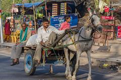 pony wagon (Pejasar) Tags: man son grandson wagon pony horse grey vendorstand parkinglot visitorcenter gulistan uttarpradesh india color redshirt child boy