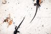 Cayo Noronqui   Archipiélago Los Roques (Mario Graziano) Tags: venezuela ve losroques arcipelago caraibi corallino isola mare sabbia spiaggia archipiélago caribe cays isla mar arena sea playa archipelago caribbean coralino island sand beach animal animals wild selvatico selvatici