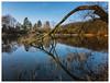 Am Cappenberger See (Peter L.98) Tags: landschaft see cappenberg lünen baum wasser canons110 ast himmel ufer