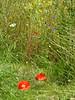 Tyneham Wild Flowers P1350213mods (Andrew Wright2009) Tags: dorset england uk scenic britain holiday vacation tyneham deserted village army firing range flowers plants wild
