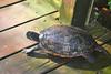 Key West (Florida) Trip 2017 0070Ri 4x6 (edgarandron - Busy!) Tags: florida keys floridakeys keywest butterflyhouse keywestbutterflyandnaatureconservatory