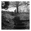Steps (Rory Prior) Tags: calderdale mytholmroyd yorkshire fence footpath gate mud muddy path stair steps winter