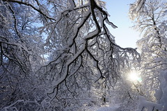 Moraån canyon, Järna (Madde Elg) Tags: moraån järna winter sun vinter sol canyon sörmland snow snö