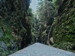 folge mir (lebastian) Tags: panasonic dmcgx8 olympus m1240mm f28 saxony sächsische schweiz mountain berg felsen stufen sachsen landschaft baum gras