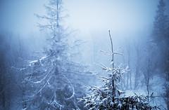 Rezerwat Śrubita (Hagbard_) Tags: snow schnee hiking outside outdoor snowshoe polen poland beskidy beskiden mountains nature intothewild forrest woods berge drausen unterwegs wanderlust wandern life fun adventure cold abenteuer ice explore exploring landscape natur beautiful winter