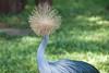 Pom Pom Head (Mariene Valesan) Tags: bird parquedasaves iguacu brasil brazil iguazu iguaçu nature naturephotography naturelovers birdphotography travel travelphoto travelphotography