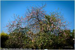 Garden of Five Senses (nikhil_mr) Tags: nature trees travel new delhi india
