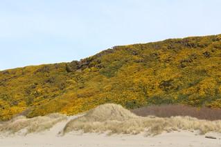 Colored hillside