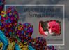 Fantasía de color - Amparo García Iglesias (Amparo Garcia Iglesias) Tags: exposicion fotografia ambito cultural corte ingles badajoz españa extremadura fotos color carnaval fiesta emociones risa llanto alegria tristeza photos amparo garcia iglesias retratos portraiture personas rostros