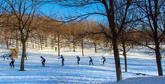 Training / Entraînement (BLEUnord) Tags: ski exercice montréal montroyal montagne mountain neige snow hiver winter lumière light arbres trees file loisir leisure entraînement training club groupe group