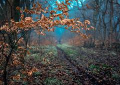 Creep. (chrismarr82) Tags: nikon scotland d750 fog winter tree